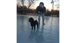 My puppy Max loves the rink!